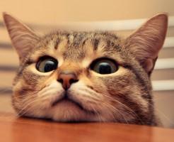 YouTube 猫を組合せて稼ぐ意外な方法とは?